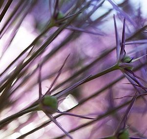 downloadable fotoprints bloemen